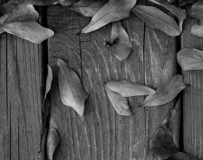 Deck Leaves